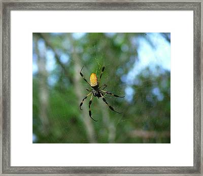 Golden Orb Weaver 1 Framed Print by Bruce W Krucke