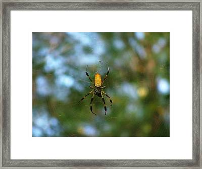 Golden Orb Weaver 2 Framed Print by Bruce W Krucke
