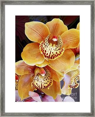 Golden Orchid Framed Print