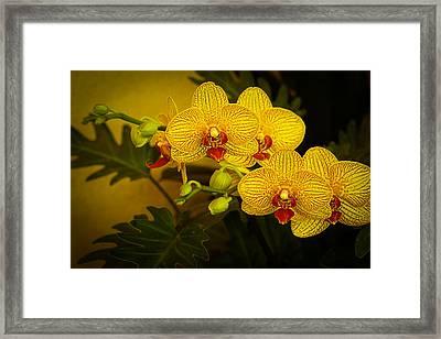 Golden Orchids Framed Print