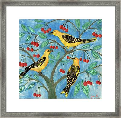 Golden Orioles In A Cherry Tree Framed Print by Sushila Burgess