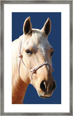 Golden Palomino  Framed Print
