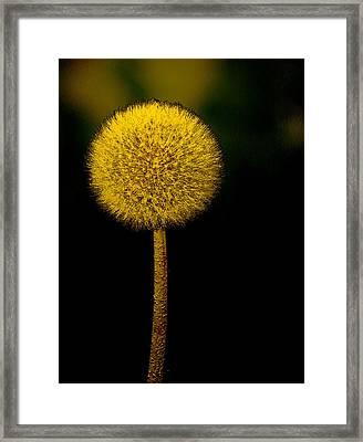 Golden Parachute Framed Print