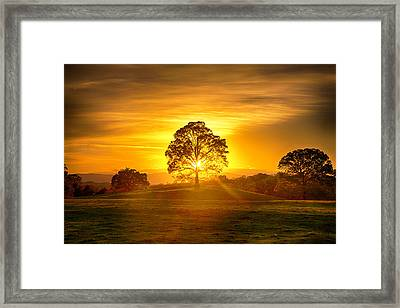 Golden Pastures Framed Print