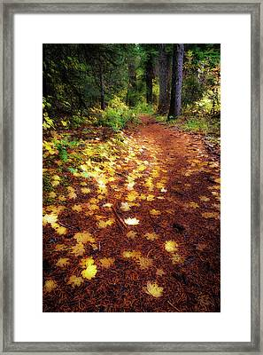 Framed Print featuring the photograph Golden Path by Cat Connor