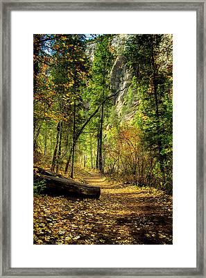 Golden Path Of Shadows Framed Print by Marshall Everett