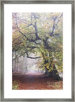 Golden Path Framed Print