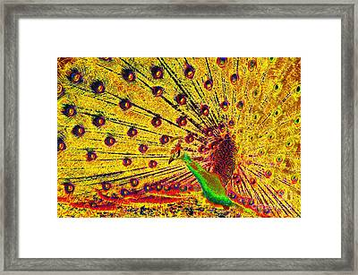 Golden Peacock Framed Print by David Lee Thompson
