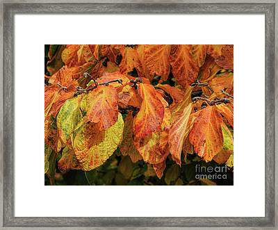 Framed Print featuring the photograph Golden by Peggy Hughes