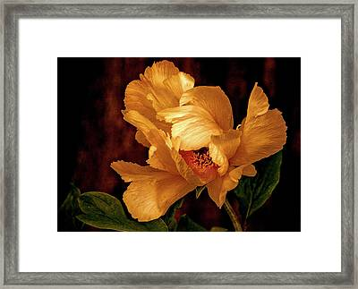 Framed Print featuring the photograph Golden Peony by Julie Palencia