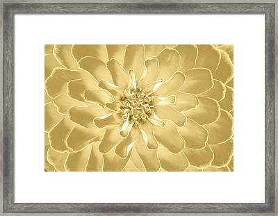 Golden Fan Framed Print by Sean Davey
