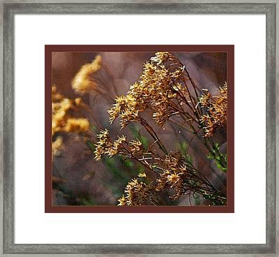 Golden Points Framed Print by Gretchen Wrede