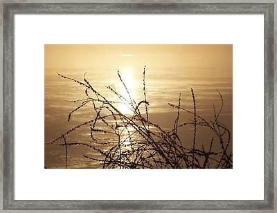 Golden Pond Framed Print by Laurie Prentice