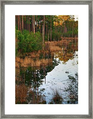Framed Print featuring the photograph Golden Pond by Lori Mellen-Pagliaro