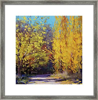 Golden Poplars Framed Print