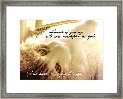 Golden Quote Framed Print by JAMART Photography