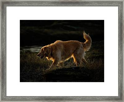 Framed Print featuring the photograph Golden by Randy Hall