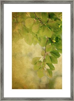 Framed Print featuring the photograph Golden by Rebecca Cozart