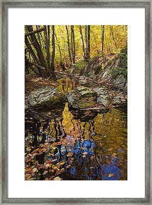 Golden Reflections Framed Print by Evgeni Dinev