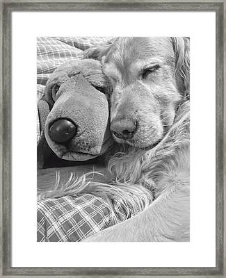 Golden Retriever Dog And Friend Framed Print