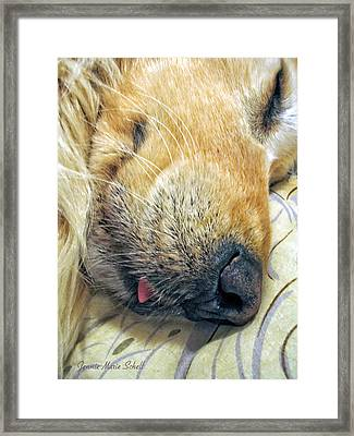 Golden Retriever Dog Little Tongue Framed Print by Jennie Marie Schell