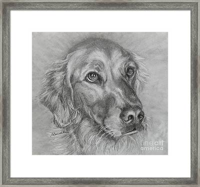Golden Retriever Drawing Framed Print