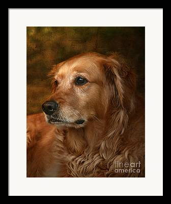 Retriever Framed Prints