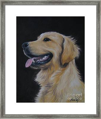 Golden Retriever Nr. 3 Framed Print