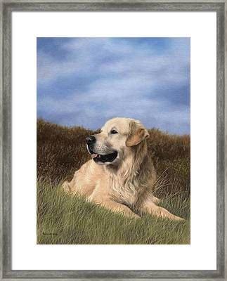 Golden Retriever Painting Framed Print