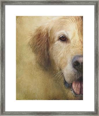 Golden Retriever Portrait 1 Framed Print by Wolf Shadow  Photography