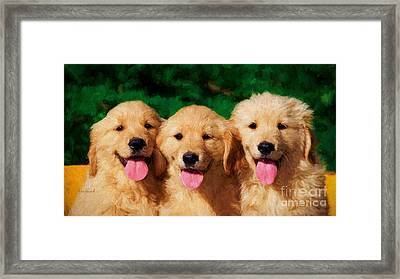 Golden Retrievers  Framed Print by Garland Johnson