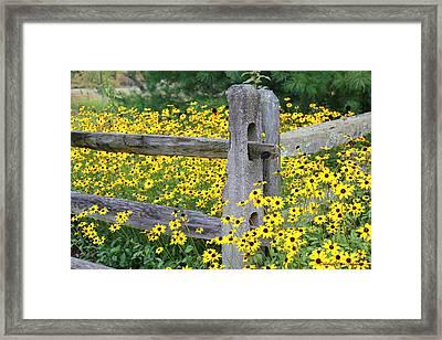Golden-rod  Crowd Out Framed Print