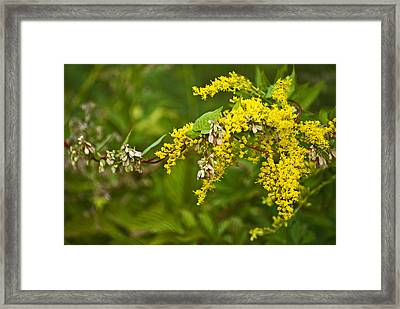 Framed Print featuring the photograph Golden Rod by Elsa Marie Santoro