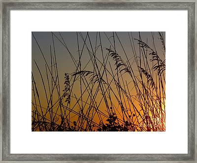 Framed Print featuring the photograph Golden Sea Oats by Terri Mills