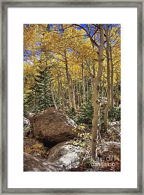 Golden Season Framed Print