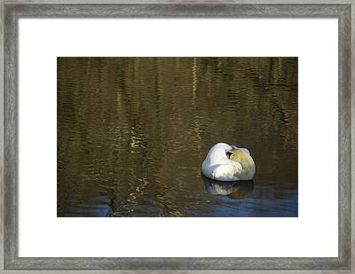 Framed Print featuring the photograph Golden Slumber by Elsa Marie Santoro