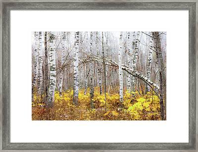 Golden Slumbers Framed Print