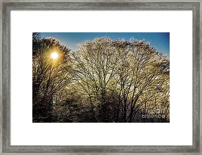 Golden Snow Framed Print