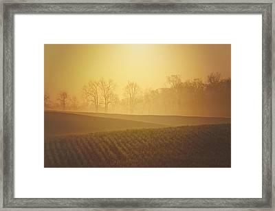 Golden Song Framed Print