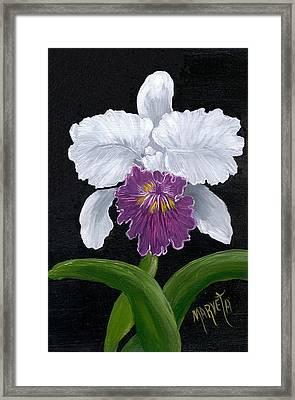 Golden Star Orchid Framed Print by Marveta Foutch