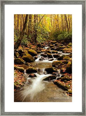 Framed Print featuring the photograph Golden Stream In The Great Smoky Mountains by Debbie Green