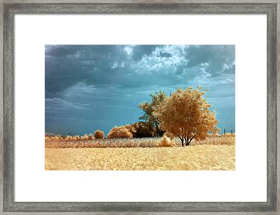 Framed Print featuring the photograph Golden Summerscape by Helga Novelli