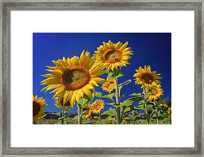 Golden Sun Framed Print by Rick Berk