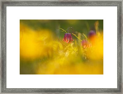 Golden Sundown Framed Print