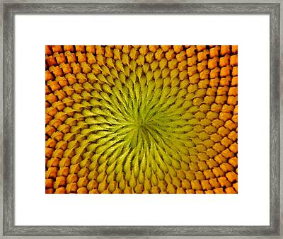 Framed Print featuring the photograph Golden Sunflower Eye by Chris Berry