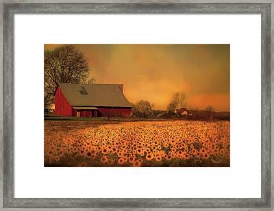 Golden Sunflower Harvest Framed Print