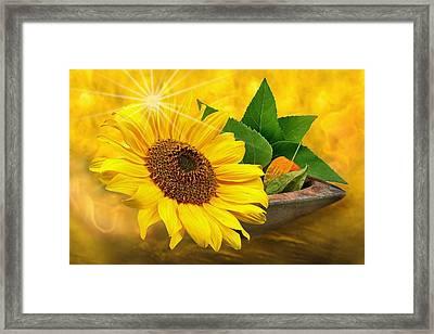 Golden Sunflower Framed Print