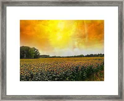 Golden Sunflowers Of Nimes Framed Print by Melvin Kearney