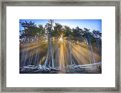 Golden Sunrise Framed Print by Martin Konopacki