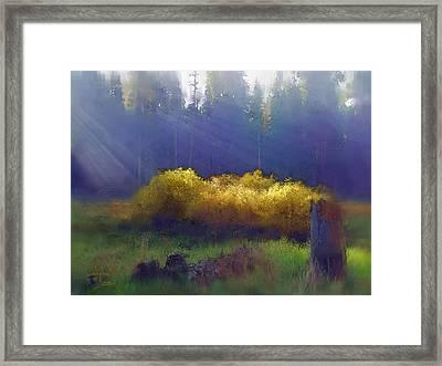 Golden Surprise Framed Print by Stephen Lucas